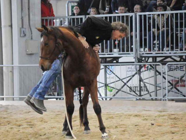 Horsenality